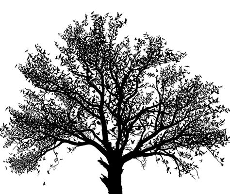 black and white tree black white homemadephotos bloguez