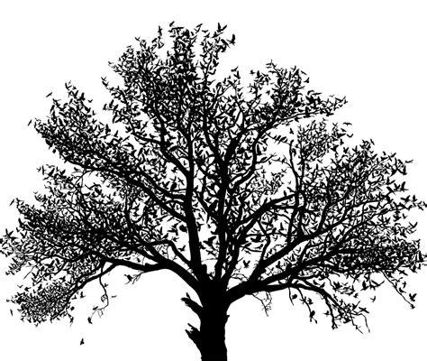 tree in white black white homemadephotos bloguez