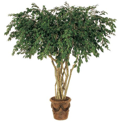 artificial trees 8 foot artificial ficus tree w 2222