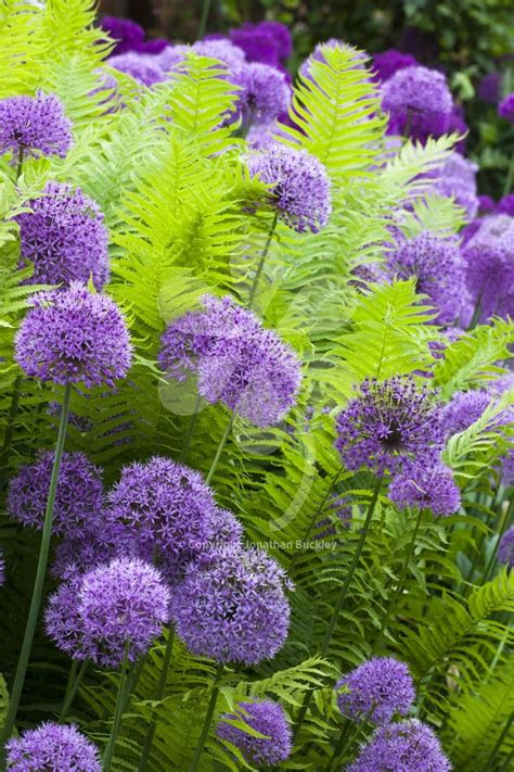 flowers shade garden best 25 shade plants ideas on plants for