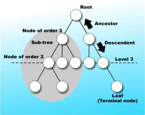 tree c data structures trees