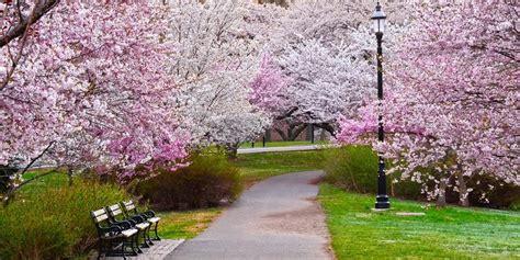 2018 bloomfest at newark s cherry blossom festival