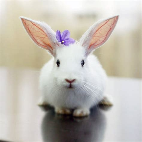 flower and bunny 53 best images about white rabbit on a bunny