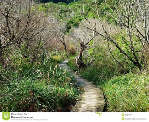 bushes and trees wooden hiking path through bushes and trees stock