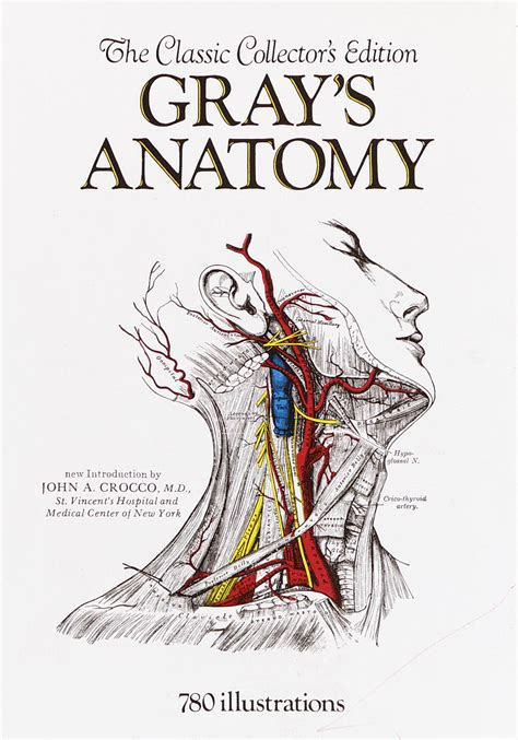 anatomy book with cadaver pictures eye diagram to label eye free engine image for user