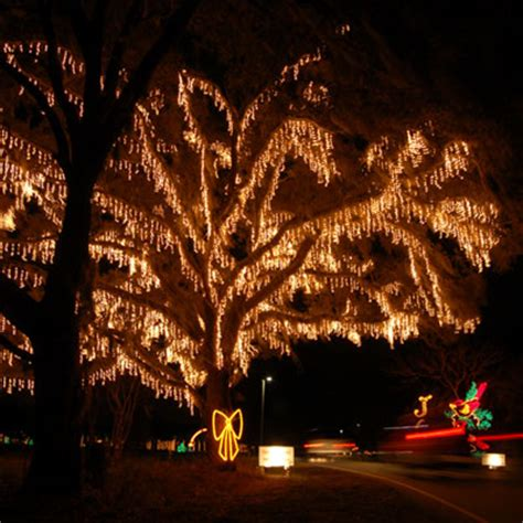 island county park lights where to see lights in charleston aviv service