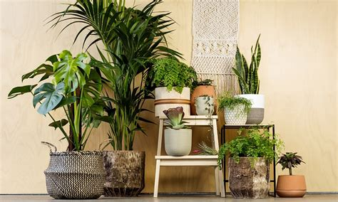 the best indoor plants house plants australia guide to the best indoor plants