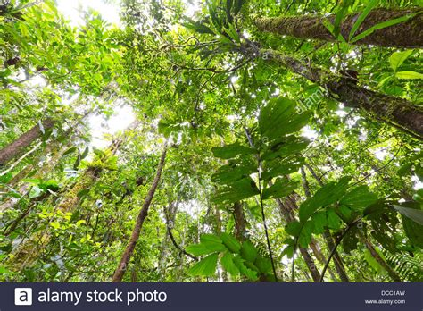 Canopy In by Rainforest Canopy Plants Www Pixshark Images