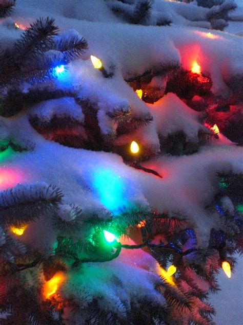 lights and snow todolwen fairylights and snow