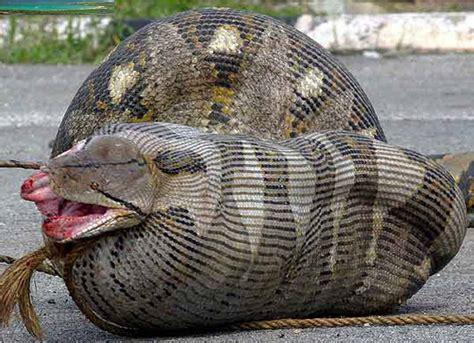 el post de los reptiles fobiasocial net