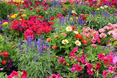 flower garden photos benefits of starting your own garden perfume genius