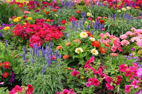 flowers gardens pictures benefits of starting your own garden perfume genius