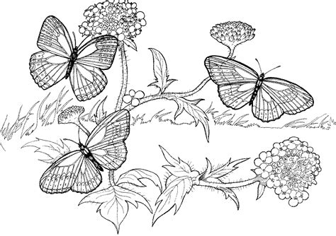 hard animal coloring pages coloring home