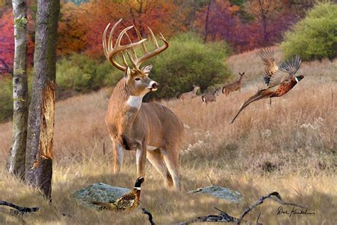 bob ross painting deer 83 best images about deer photo s on