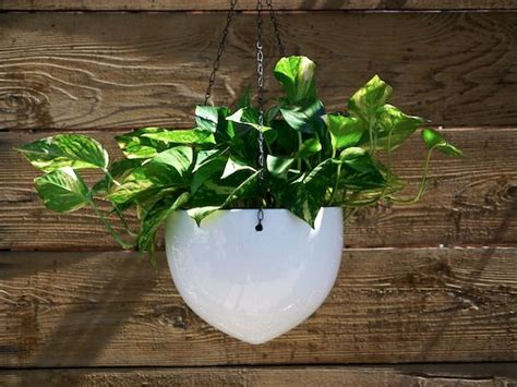 white hanging planter white hanging ceramic bullet planters decorate