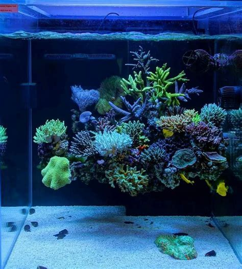 17 best ideas about reef aquascaping on reef aquarium saltwater tank and nano reef