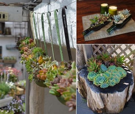 succulent planter ideas 10 cool succulent planter ideas for your home