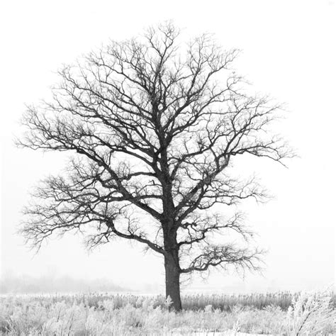 black and white tree 5x5 black and white tree print dreamy nature print