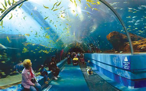 enjoy a day at the mall of america aquarium
