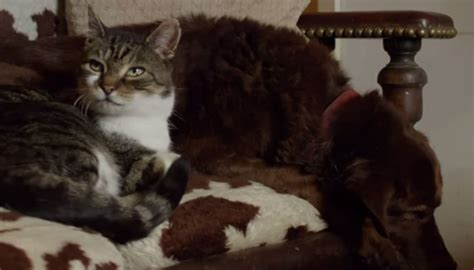 cat paradise cat guides blind in his