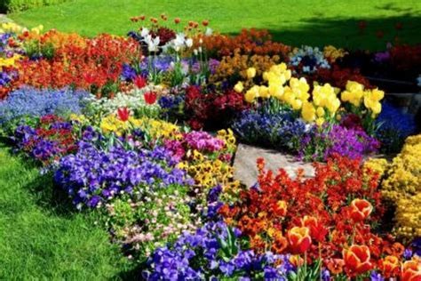 images of flowers in the garden flower garden on 2 new hd wallpapers