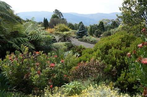 mt tomah botanic garden mount tomah new south wales wikiwand