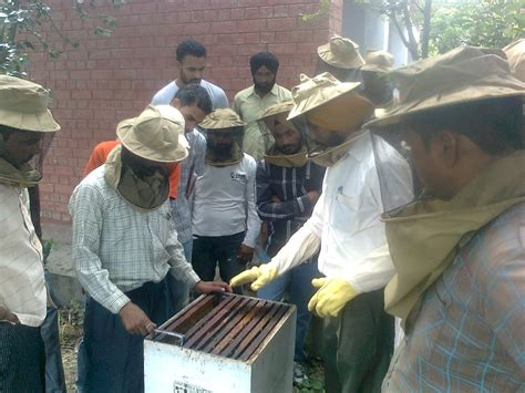 course in india beekeeping in patiala punjab india bee