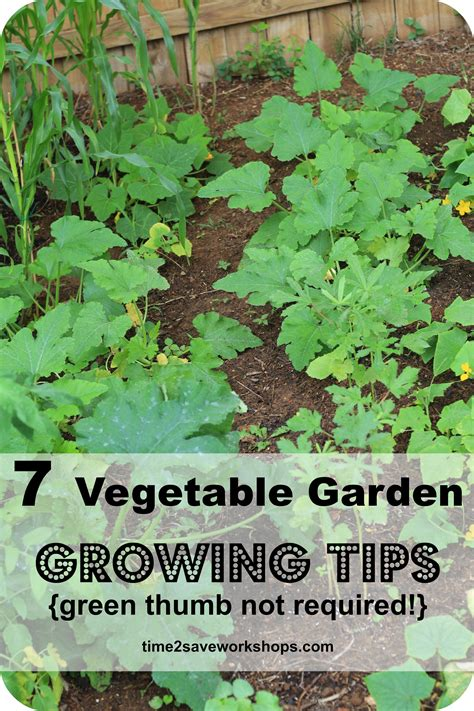 tips for planting a vegetable garden green thumb not required 7 vegetable garden growing