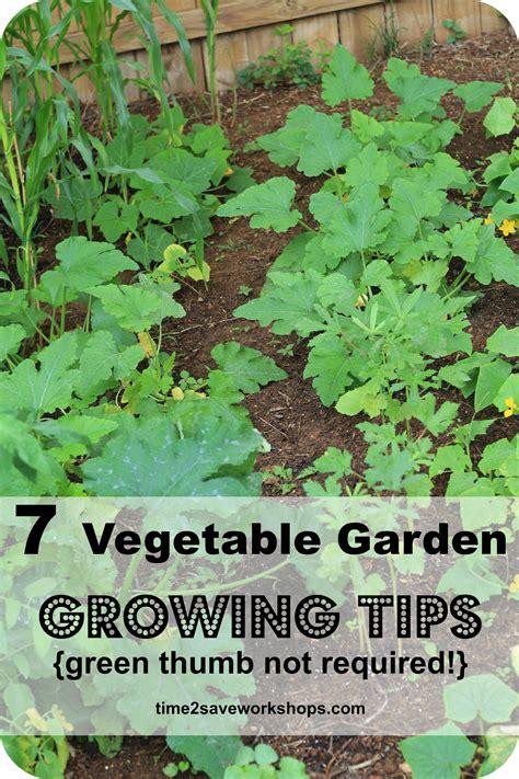 growing vegetable garden green thumb not required 7 vegetable garden growing