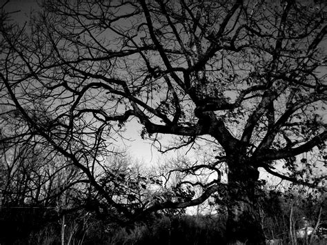 tree on black background tree black and white background wallpapers 4247 amazing
