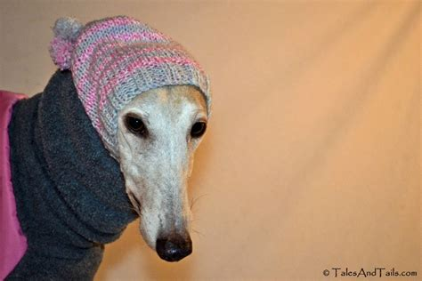 knitting for greyhounds greyhound knitted hats images