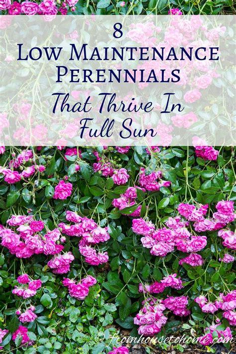 garden flowers perennials best 20 sun plants ideas on sun