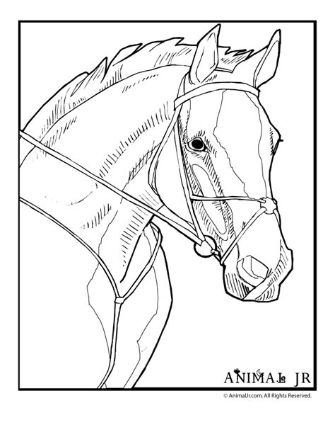realistic horse coloring pages coloring home