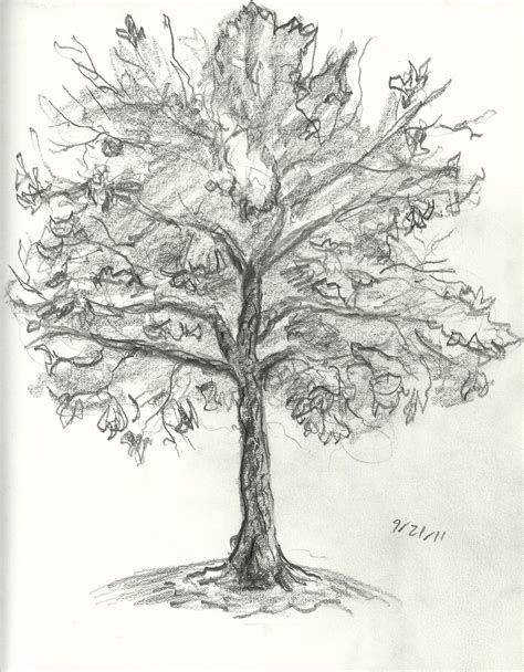 tree drawing brandon orden tree drawings