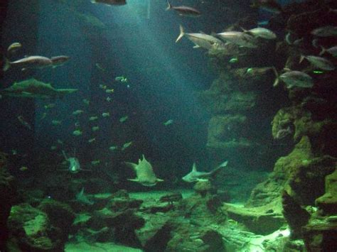 animation plong 233 e dans le bassin g 233 ant des requins picture of aquarium mare nostrum