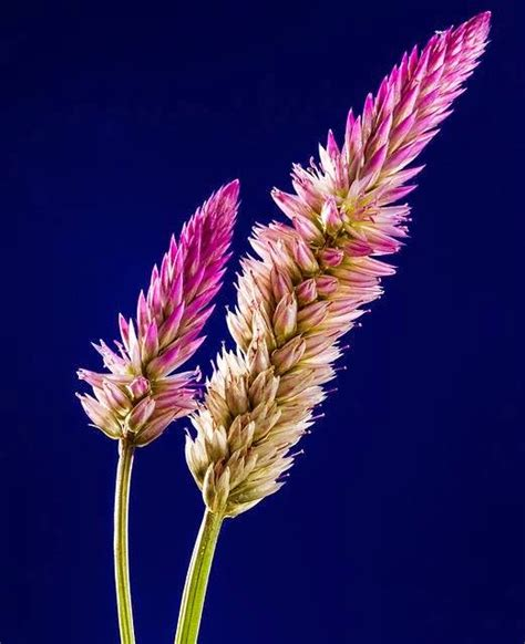 flower images lovable images flowers pictures free