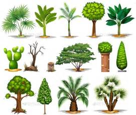 type of trees different types of trees by blueringmedia graphicriver
