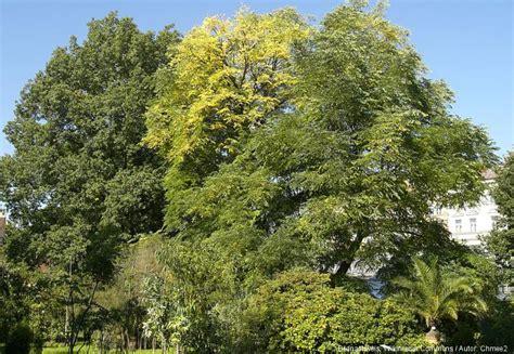 Der Garten Tschechischer botanischer garten der prager karls universit 228 t