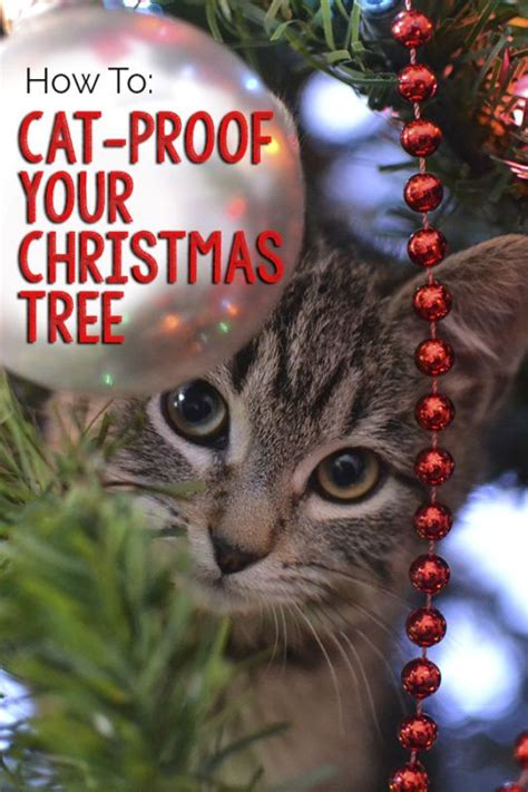 how to keep cats out of your tree 28 best keep cat away from tree keeping cats