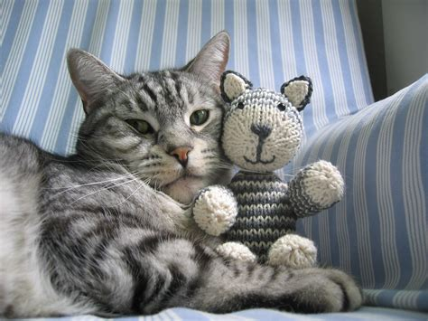 cat knitting i can has writing about cats make and do with perri