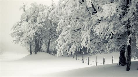 snowy tree pictures snowy trees winter hd desktop wallpapers 4k hd