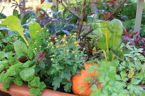 flowers to plant in vegetable garden veggies herbs and flowers how to mix edible plants in