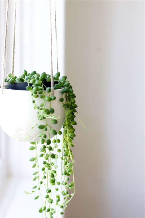 the best indoor plants best 25 indoor plant decor ideas on plant