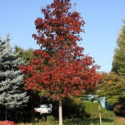 tree sale arbor hill trees omaha blogarbor hill trees omaha