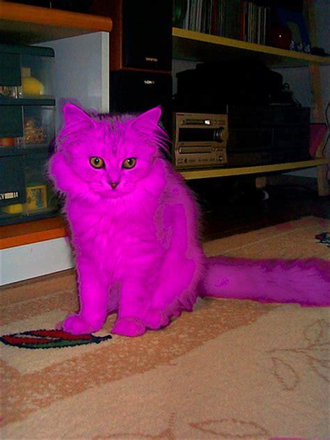 pink cat pink cat steve flickr