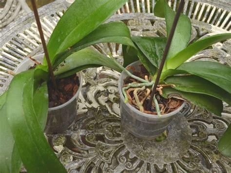 25 best ideas about entretien orchid 233 e no une orchid 233 e rempoter une orchid 233 e e