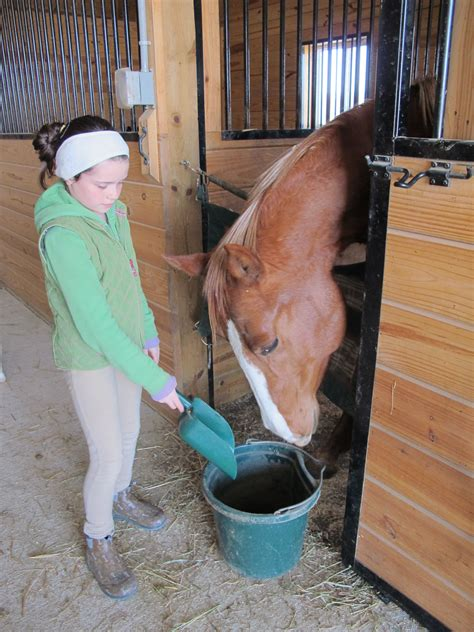 how many pony in a pound five common mistakes made when feeding a ecoequine