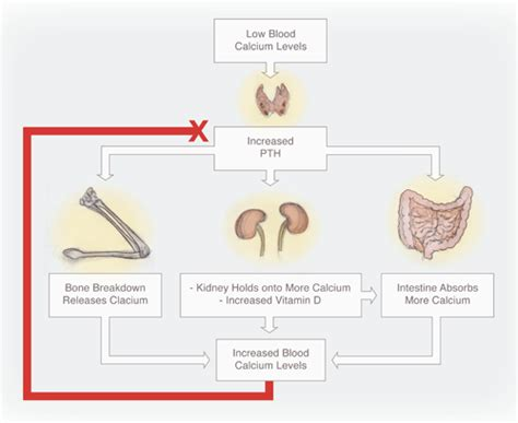 caffeine calcium and the thyroid thyroid disease information rachael edwards