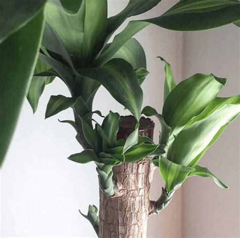 mejores plantas de interior las mejores plantas de interior para purificar el aire