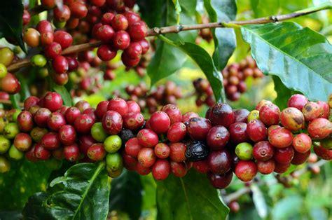 How Well Do You Know Caffeine?